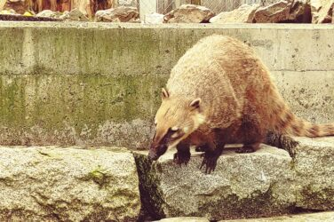 Zu Gast im Zoo Hof